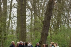 Stinsenflora wandeling april 2011