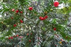 Het bestuur van de VVHH wenst iedereen een groen en tevredenstellend 2014