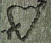 hartje-vrienden-haarlemmer-hout